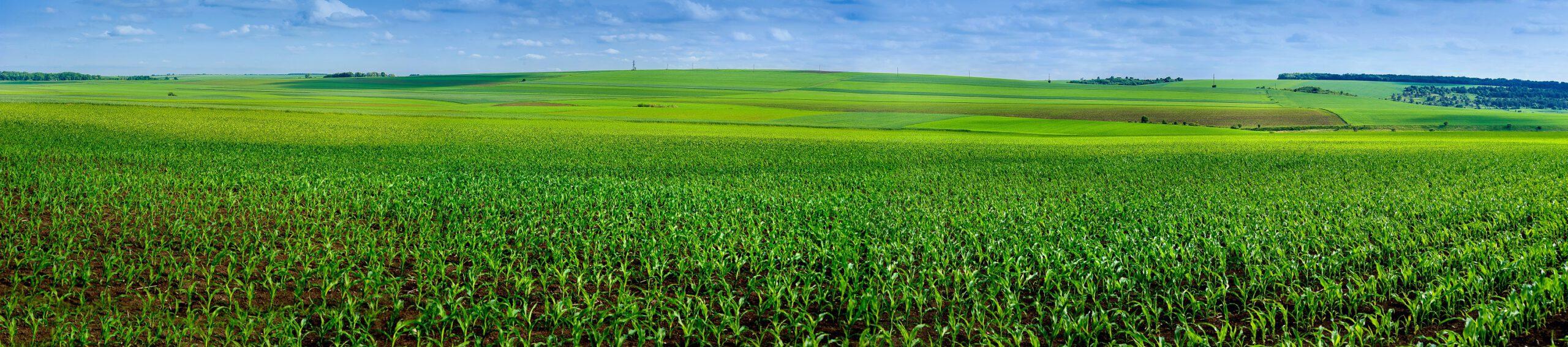 """Biogasanlagen – das Label """"Bio"""" ist meist falsch!"""